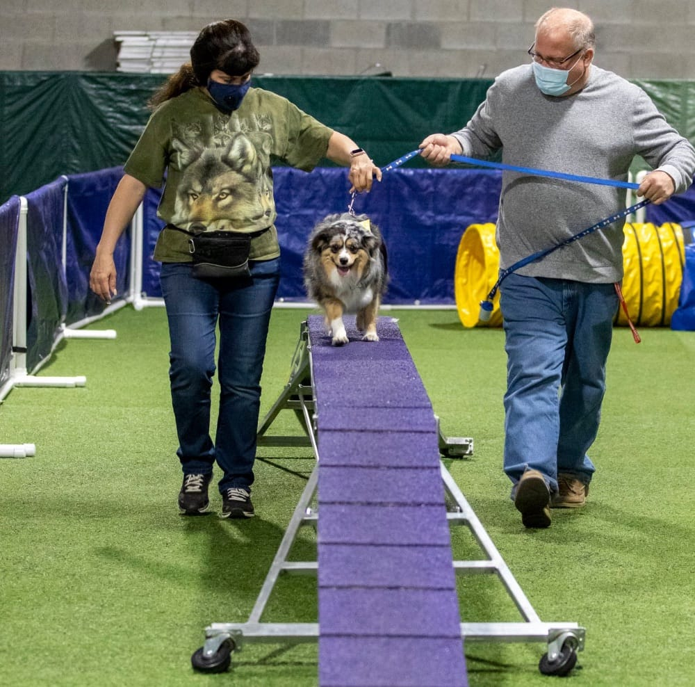 Think Pawsitive Agility Course
